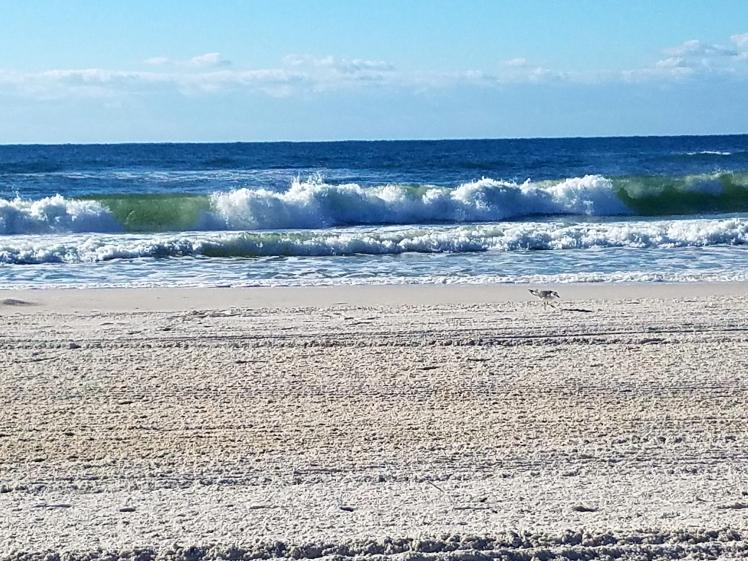 waves Orange Beach